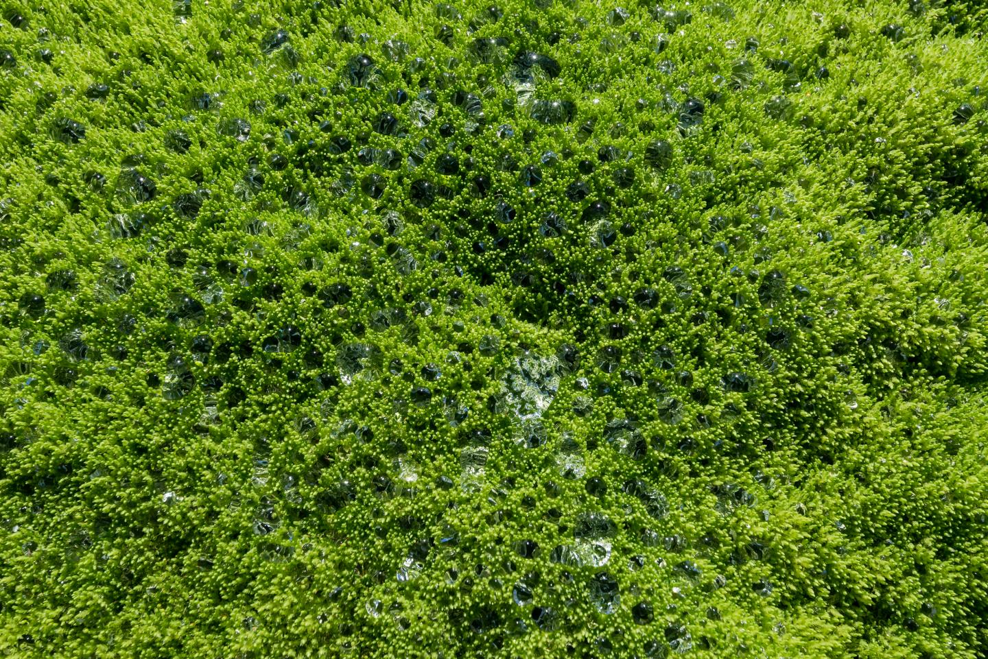 How land plants affected Earth's climate control